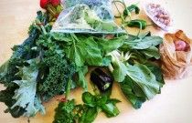 Harvest Time: Vancouver Local Food Resources