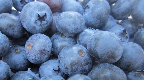 harvest local food thanksgiving blueberries