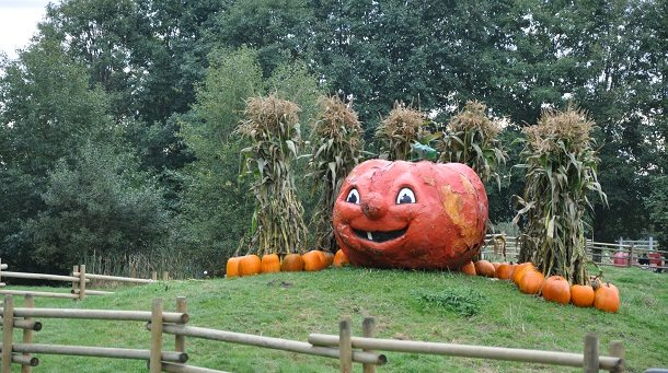 Pumpkin Patch at Richmond Country Farms Jack-o-Lantern Halloween