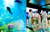 What to do in Vancouver: Enjoy a Night at the Aquarium