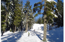 What to do in Vancouver: Snowy Fun on Grouse Mountain