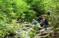 What to do in Vancouver: Explore Nature at the Lynn Canyon Ecology Centre