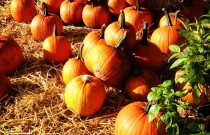 Fall Birthday Party Ideas in Vancouver