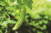 Summer in Vancouver: Grow an Edible Garden