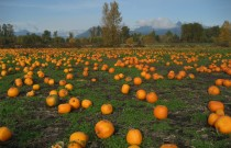 Quick Guide to Halloween in Vancouver