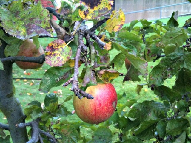 UBC Garden Apple Festival