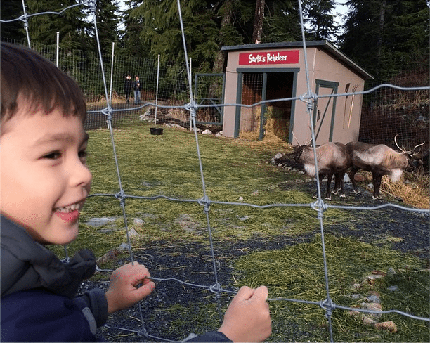 VMgram instagram grouse mountain holidays christmas reindeer santa