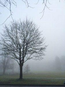 fog memorial south park