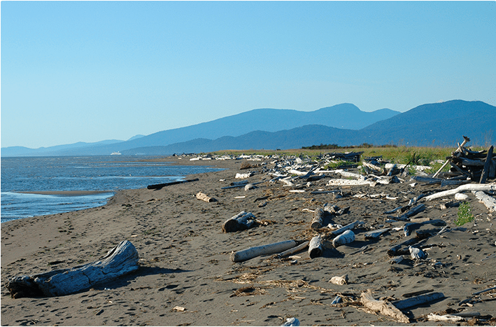 Dog Friendly Beaches Vancouver