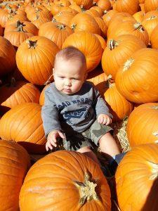 pumpkins-1129115_1920