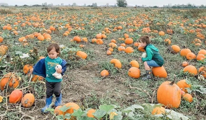 Westham Island Pumpkin Farm